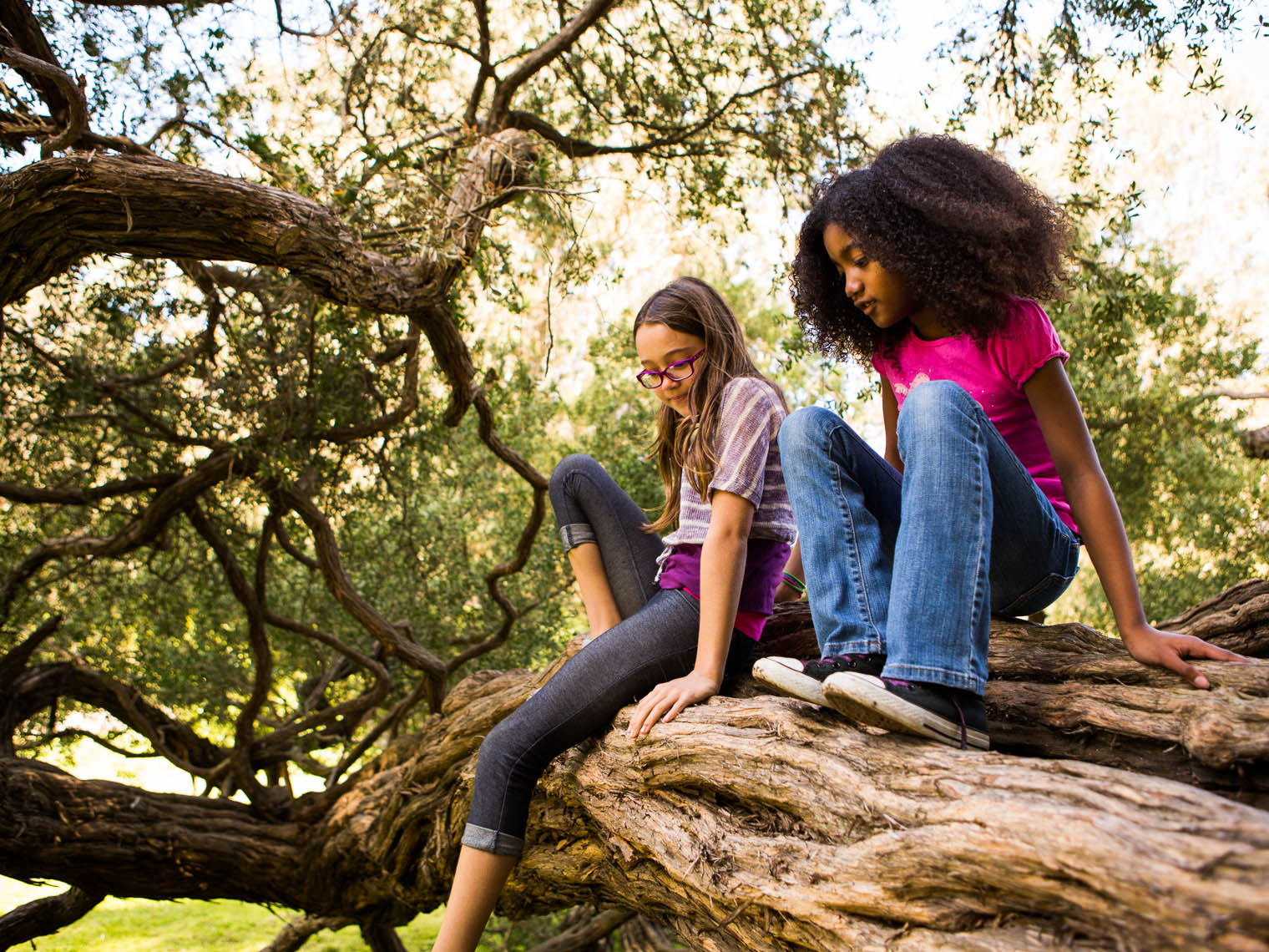 Girls climbing tree.