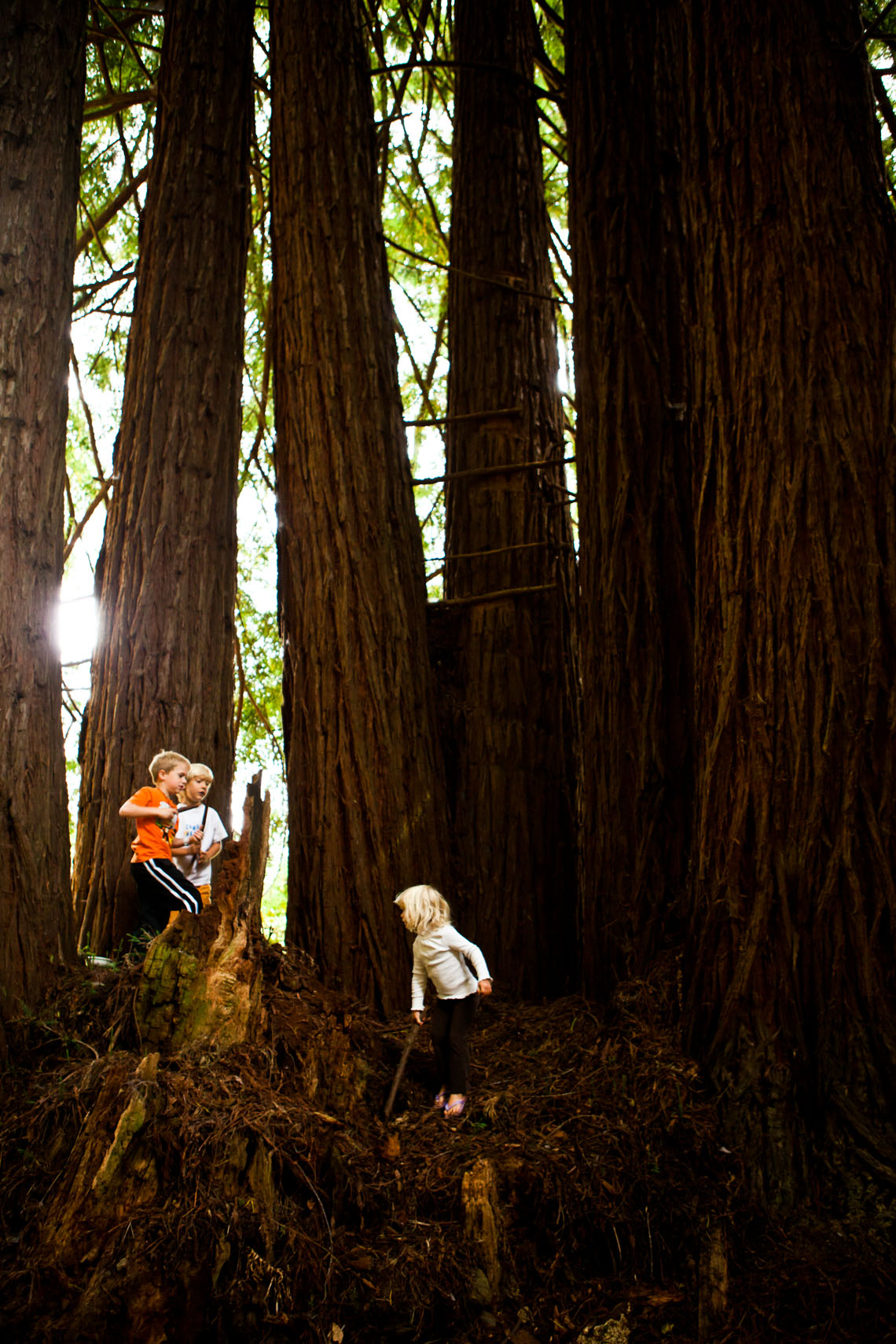 Kids playing in redwood trees.